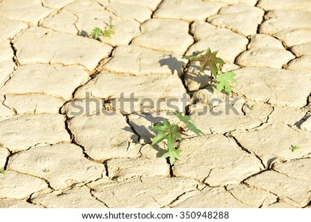 selective focus of small trees grow on cracked clay texture - stock photo