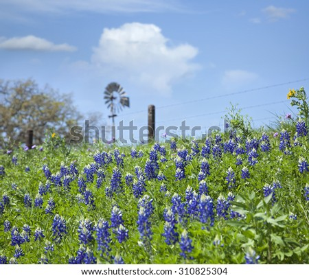 Selective focus of Texas Bluebonnets and windmill on a hillside - stock photo
