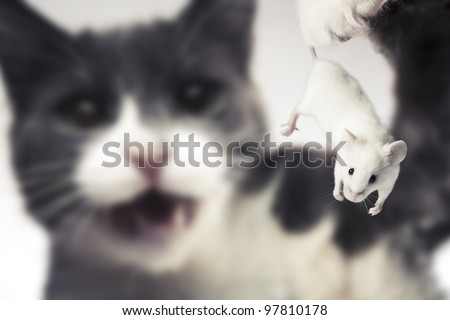 selective focus on a mouse that is about to be eaten - stock photo
