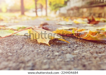 Selective focus on autumn leaves on the sidewalk as seen from a worm�s eye view./Autumn leaves  - stock photo