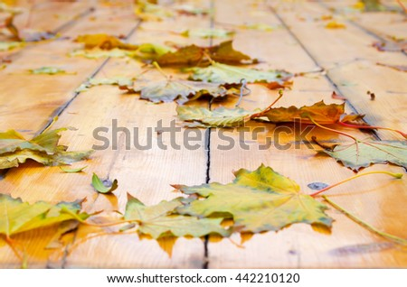 Selective focus on the autumn fallen maple leaves with shallow depth of field on natural wooden boards - stock photo