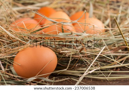 Selective focus on the egg lying near the thatched nest with eggs on background - stock photo