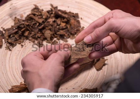 Selective focus on the process of making cigars from dried up leaves of tobacco plant. Close up
