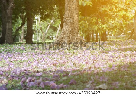selective focus tree in the park with sunlight