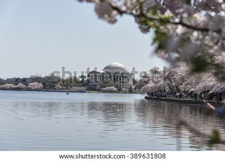 Selective focus was used on these Cherry trees that are in full bloom along the tidal basin as they frame the landmark Jefferson Memorial in Washington, DC.  - stock photo