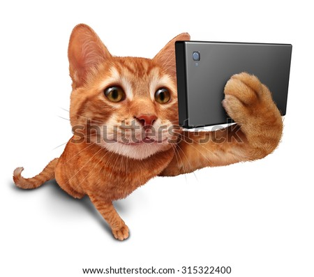 Selfie cat on a white background as a cute orange tabby kitty with a smile in forced perspective taking a selfy portrait picture with a smartphone or digital camera as funny social networking symbol. - stock photo