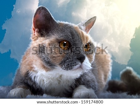 Selkirk Rex cat against the sky - stock photo