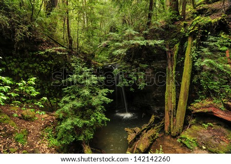 Sempervirens Falls by Big Basin Redwoods State Park