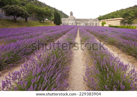 Senanque, famous cisterciansian abbey in provence france