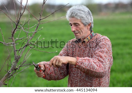 Senior adult man pruning tree in orchard selective focus on face - stock photo