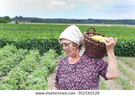 Senior country woman carrying knitted basket with yellow bean in the field  - stock photo