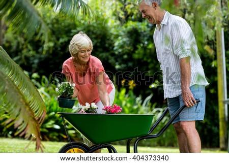 Senior couple enjoying with wheelbarrow and flower pots in yard - stock photo
