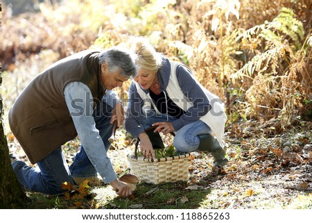 Senior couple in forest picking mushrooms