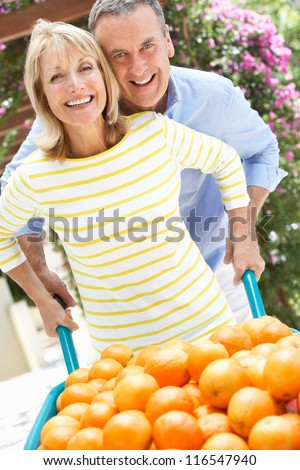 Senior Couple Pushing Wheelbarrow Filled With Oranges