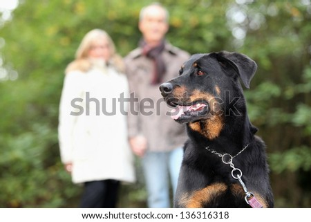 Senior couple walking dog - stock photo