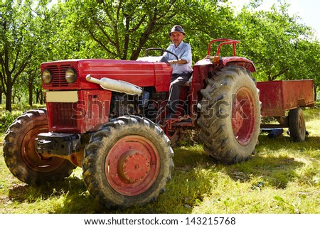 Senior farmer driving his old tractor with trailer through a plum trees orchard
