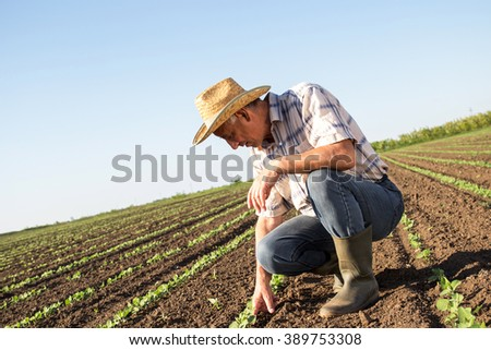 Senior farmer in a field examining crop, focus on hand. - stock photo