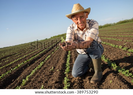 Senior farmer in a field holding crop in his hands