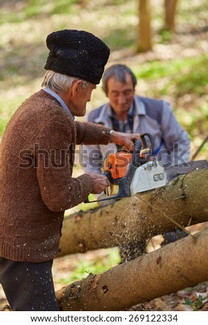 Senior farmers woodcutters cutting down trees for timber or firewood - stock photo