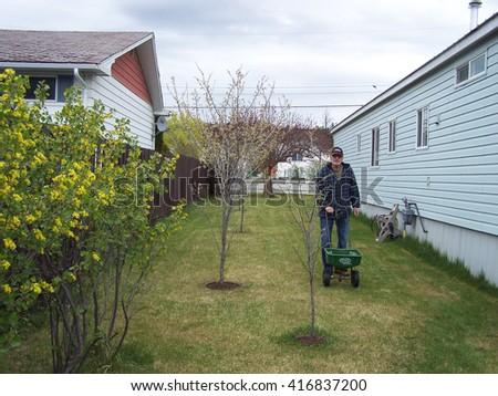 Senior fertilizing the lawn in the early spring - stock photo