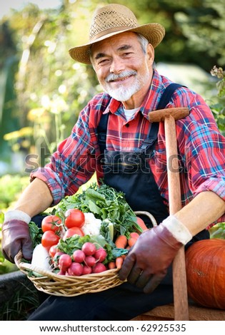 Senior gardener with a basket of harvested vegetables in the garden - stock photo