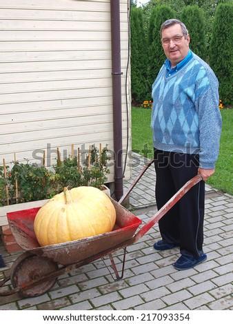 Senior gardener with big pumpkin in his wheelbarrow - stock photo