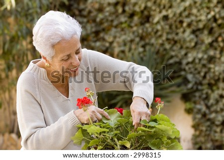 senior lady looking after her geraniums in her garden