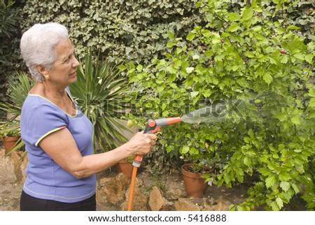 senior lady watering her plants - stock photo