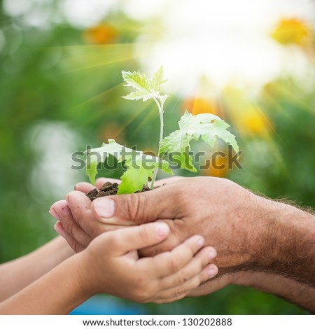 Senior man and baby holding young maple tree in hands against spring green background. Environmental protection concept - stock photo