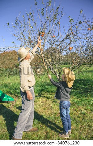 Senior man and cute happy kid picking fresh organic apples from the tree with a wood stick. Grandparents and grandchildren leisure time concept. - stock photo
