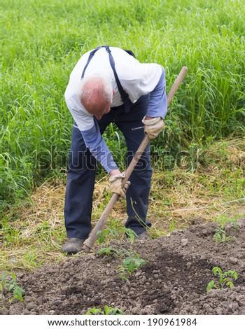 senior man as a farmer - stock photo