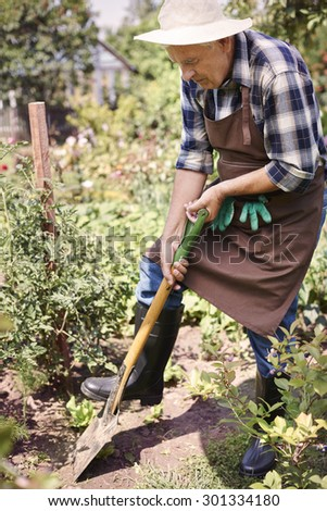 Senior man digging in the garden - stock photo