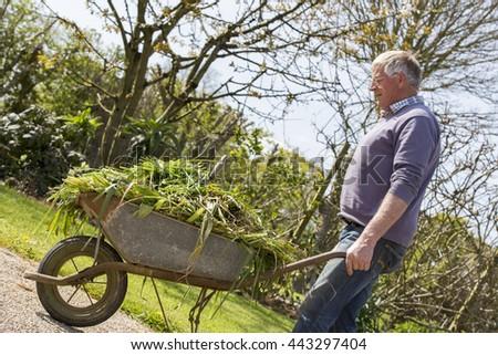 Senior man gardener with full barrow in garden sun shine - stock photo