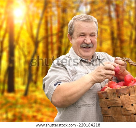 Senior man, harvesting an apples - stock photo