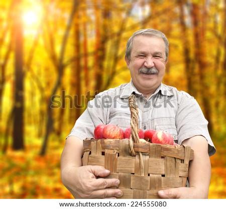 Senior man, harvesting an apples - stock photo