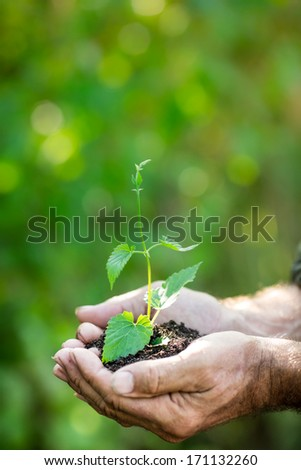 Senior man holding young plant in hands against spring green background. Ecology concept - stock photo