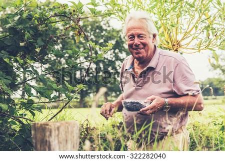 Senior man in garden with bowl fresh picked blackberries. - stock photo