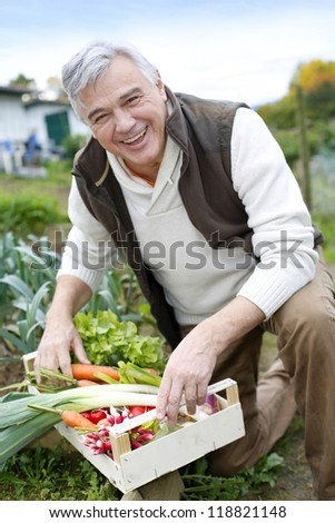 Senior man in kitchen garden picking vegetables - stock photo