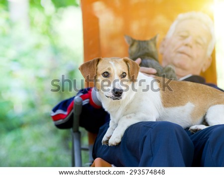 Senior man lying in sunbed in courtyard while dog and cat sitting in his lap - stock photo