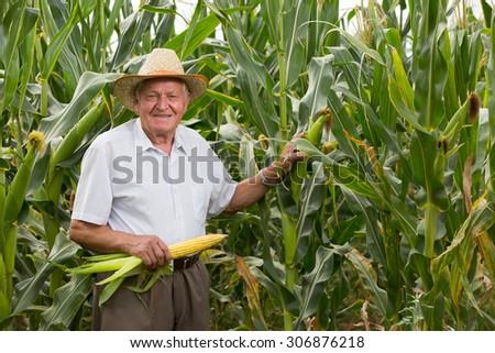 Senior man on field corn with corn ears - stock photo