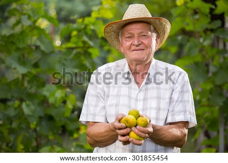 Senior man picking figs in an orchard. Selective focus - stock photo