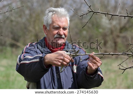Senior man pruning tree in orchard, active retirement, selective focus on face - stock photo