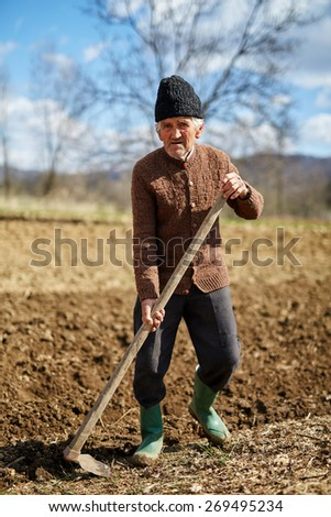 Senior man sowing potato tubers into the plowed soil