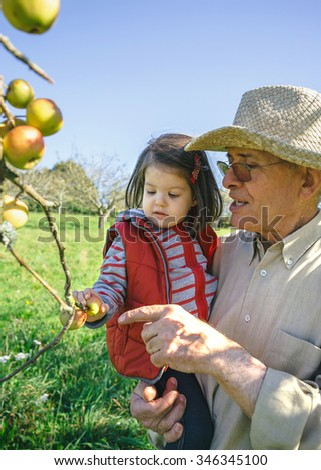Senior man with hat holding adorable little girl picking fresh organic apples in a sunny autumn day. Grandparents and grandchildren leisure time concept. - stock photo