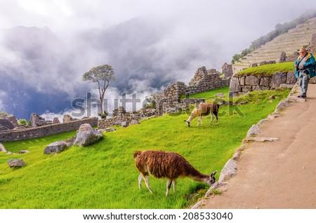 Senior tourist watching llamas in ruins of Machu Picchu, Peru - stock photo