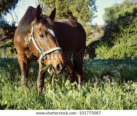 Senior Warmblood Mare eating grass in field of flowers