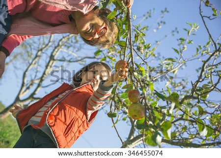 Senior woman and adorable little girl picking fresh organic apples from the tree in a sunny autumn day. Grandparents and grandchildren leisure time concept. - stock photo