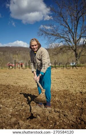 Senior woman covering potatoes on a fresh plowed field; sowing potatoes - stock photo