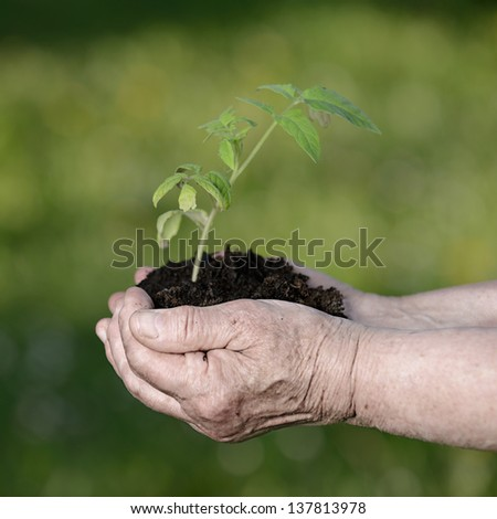 Senior woman hands holding a green young plant