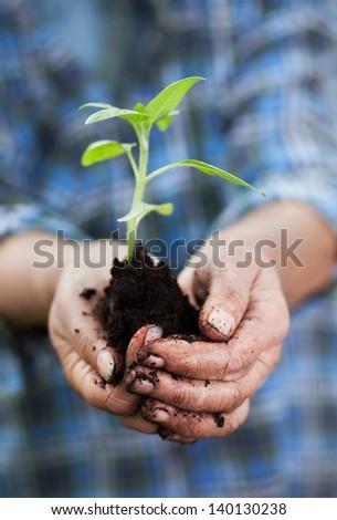 Senior woman holding small sunflower plant, shallow dof - stock photo